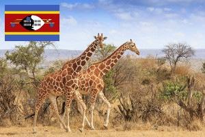 Gebührenfrei Geld abheben in Swasiland