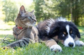 Welche Haustiere mit auf die Reise dürfen, hängt von verschiedenen Faktoren ab