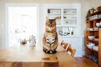 Wer sein Haustier nicht mit in den Urlaub nehmen kann, muss sich um rechtzeitig um die Haustierversorgung kümmern
