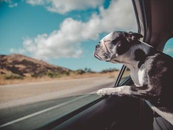 Welche Transportmöglichkeiten sich für Haustiere eignen, hängt von der Art des Haustieres und der Entfernung des Reiseziels ab